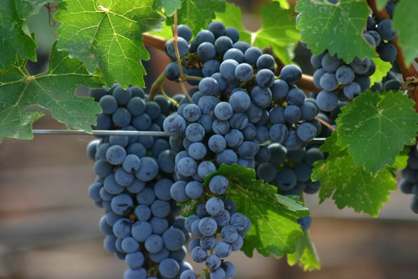 wineplus10l