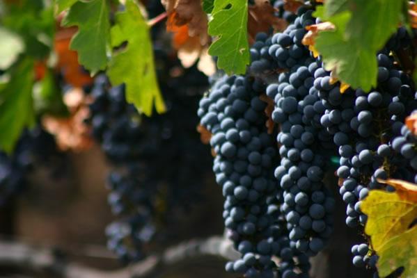 wineplus8l