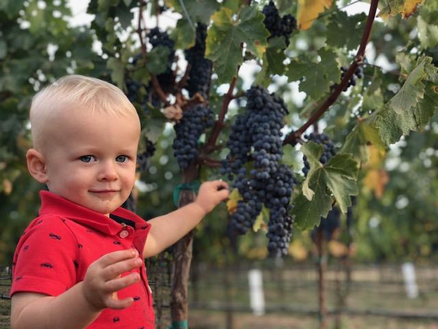 2018 intern grape sampler, the little prince!